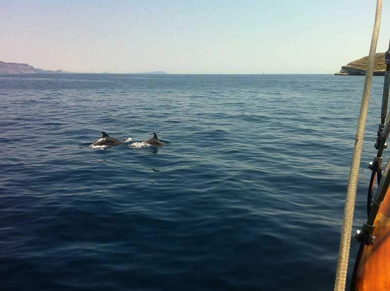 Les dauphins en méditerranée